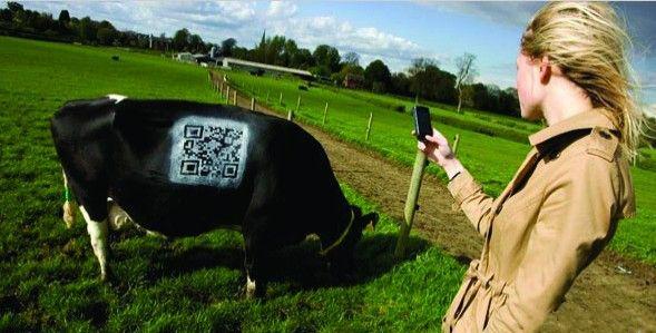 超高频手持机在畜牧业管理追溯系统中的应用
